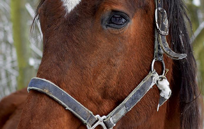Il grande freddo, quali rischi per il nostro cavallo?
