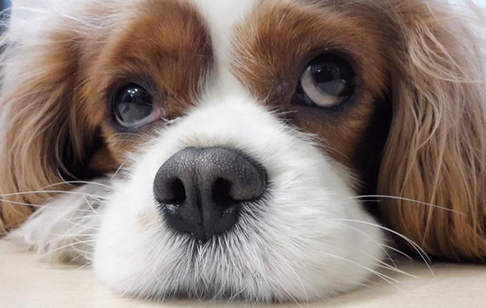 Oli Essenziali per i pet: quando e come usarli