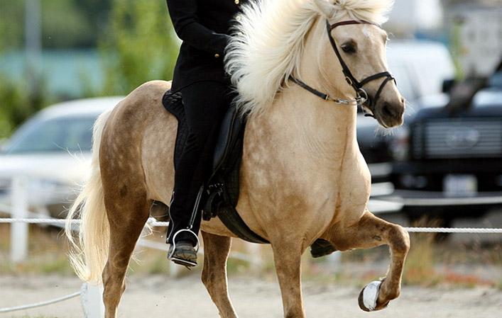 Le andature del cavallo Sull'ambio: per capire