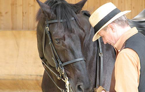Terapia fisica vascolare Bemer Horse Set