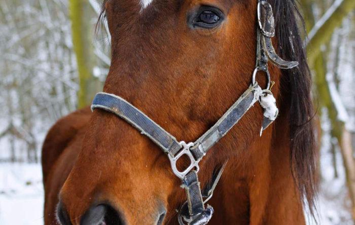 IL GRANDE FREDDO: Giornali e televisioni ci mettono in guardia sull'arrivo di neve e gelo, ma i nostri cavalli che rischi corrono? Cosa fare per loro?