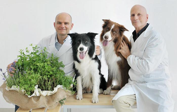 L'otite nel cane: cos'è, le cause e la soluzione