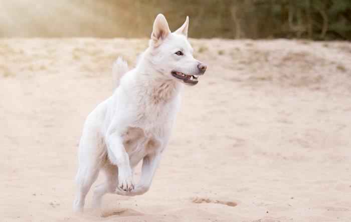 La flora intestinale del cane è sotto attacco! Il danneggiamento della flora intestinale del cane è la madre di tutte le patologie attuali