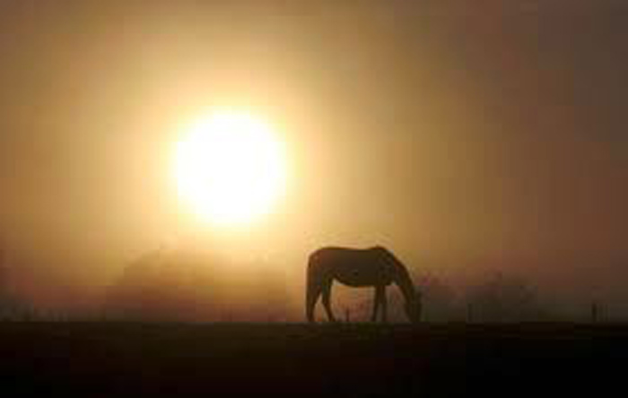 """Elezioni F.I.S.E. 2012: in attesa che una nuova """"alba"""" illumini il mondo equestre, qualcosa si muove nel segno della speranza"""