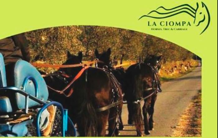 Bischerotto Tour: Viaggio a carrozza in Toscana