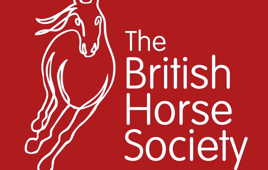 Con la British Horse Society puoi diventare istruttore di equitazione in tempi brevissimi e il tuo titolo è riconosciuto in ben 36 paesi.