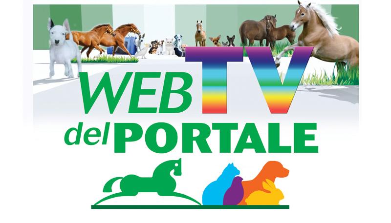 Rivedi subito la seconda puntata della WebTV del Portale, oltre 3 ore di formazione e talk