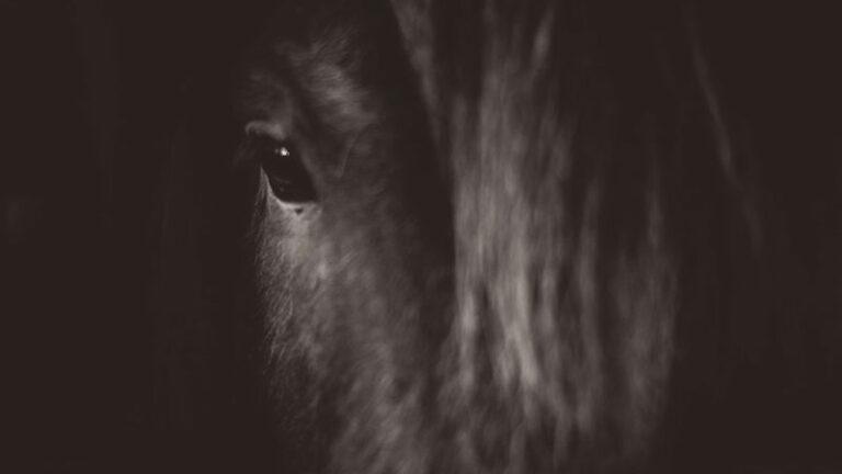 Operazione 'Cesare': Horse Angels C'è